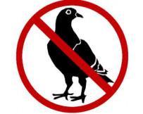Anti-Duivenpinnen ECOPIC 2 NO PIGEONS